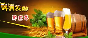 啤酒酿造工艺