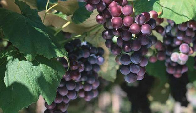 收藏葡萄酒没有那么高大上 记住这8个建议