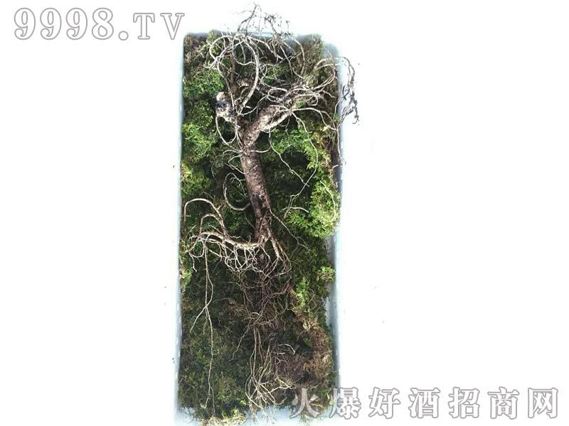 石柱山参-(5)