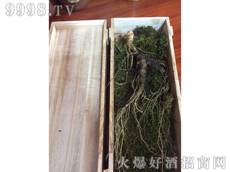 石柱山参-(4)