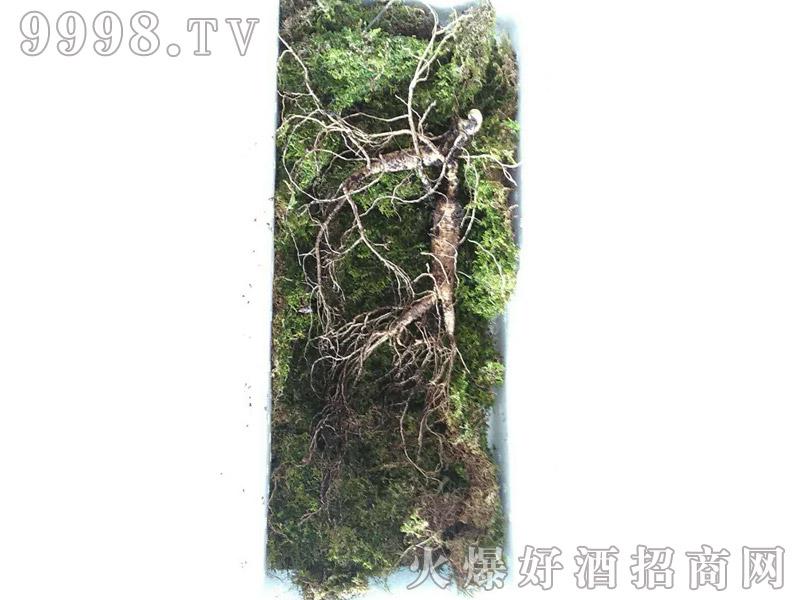 石柱山参-(3)