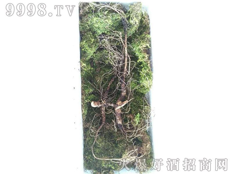 石柱山参-(1)