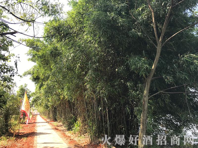 江西饶州酒业有限责任公司新厂风景