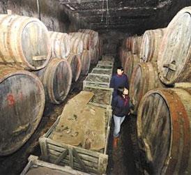 探寻青岛葡萄酒的百年文化