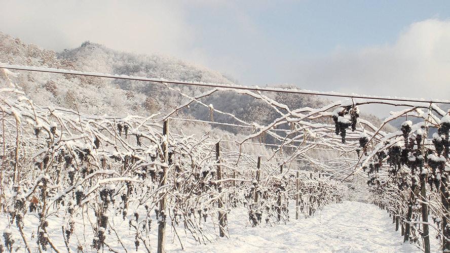 青岛冰雪传奇酒业有限公司