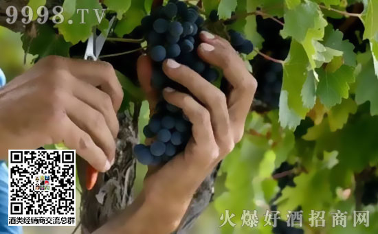 法国5大葡萄酒热门旅游目的地盘点