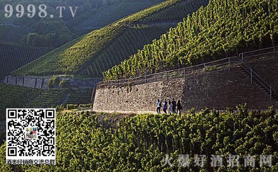 葡萄酒风土:探寻影响葡萄种植的自然因素