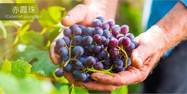 圣堡龙 艾森干红葡萄酒
